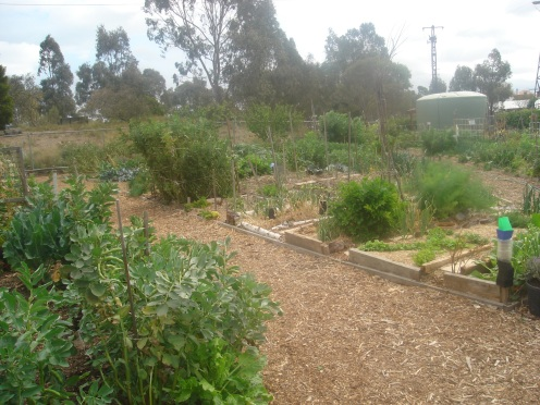 Rushall Community Gardens